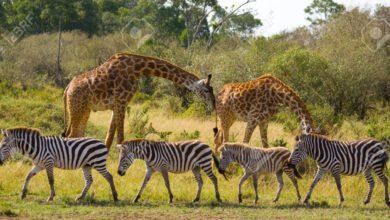 Photo of Ripoti ya WWF: Wanyamapori wanapungua kwa kasi kutokana na shughuli za binadamu