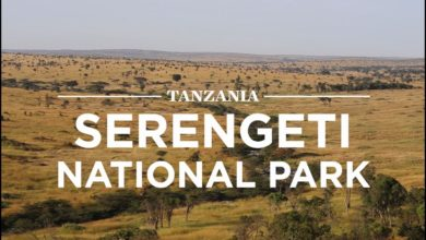 Photo of Hifadhi ya Tanzania ya Serengeti yatangazwa kuwa bora duniani  (+ Video)